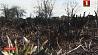 В Минском районе при сжигании мусора на дачном участке  ожоги получил 75-летний мужчина  Новыя выпадкі парушэння правіл распальвання вогнішча і выпальвання  сухой травы зафіксаваныя ў Беларусі
