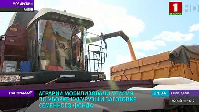 В Беларуси стартовала уборка кукурузы на зерно