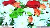 Цены растут быстрее, чем цветы Кошты растуць хутчэй, чым кветкі