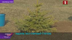 Неделя леса стартовала в регионе Тыдзень лесу стартаваў у рэгіёне