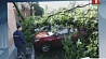 В Минске индивидуально рассмотрят каждый случай падения деревьев на автомобили У Мінску індывідуальна разгледзяць кожны выпадак падзення дрэў на аўтамабілі