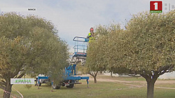 Новый образ деревьям придают столичные озеленители Новы вобраз дрэвам надаюць сталічныя азеляніцелі