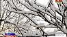 В Беларуси синоптики объявили оранжевый уровень тревоги из-за гололеда У Беларусі сіноптыкі аб'явілі аранжавы ўзровень трывогі з-за галалёду