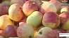 Аграрный год завершают фермеры Минской области Аграрны год завяршаюць фермеры Мінскай вобласці