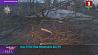 В Дзержинском, Минском и Червенском районах зафиксированы случаи падения деревьев