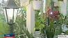 В клецкой гимназии одиннадцатый год цветет зимний сад У клецкай гімназіі адзінаццаты год цвіце зімовы сад