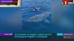 В Испании на видео сняли акулу, кружащую рядом с пловцом