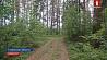 4 женщины, которые  потерялись в лесу, нашлись 4 жанчыны, якія  згубіліся  ў лесе, знайшліся