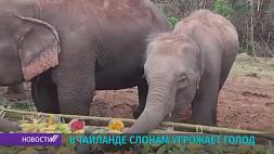 В Таиланде более 100 слонов распределяют по деревням, чтобы избежать голода в нацпарках У Тайландзе больш як 100 сланоў размяркоўваюць па вёсках, каб пазбегнуць голаду ў нацпарках
