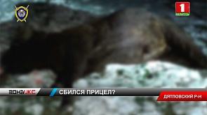 В Дятловском районе охотник из Минска подстрелил зубра
