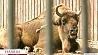 Минский зоопарк празднует свой 29-й день рождения Мінскі заапарк святкуе свой ??29-ы дзень нараджэння