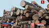 Белорусский лес снова на контроле Госинспекции охраны животного и растительного мира Беларускі лес зноў на кантролі Дзяржінспекцыі аховы жывёльнага і расліннага свету