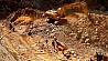 В Мьянме в результате оползня на нефритовой шахте погибли 50 человек