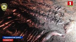 Браконьеров, которые использовали сети, задержали в Ганцевичском районе Браканьераў, якія выкарыстоўвалі сеткі, затрымалі ў Ганцавіцкім раёне