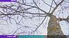 С начала года в Минске уже высадили свыше 5 000 деревьев  З пачатку года ў Мінску ўжо высадзілі звыш 5 000 дрэў  Over 5,000 trees planted in Minsk early this year