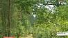 В Беларуси первый день осени будет по-летнему теплым У Беларусі першы дзень восені будзе па-летняму цёплым