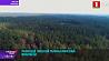 Развитие лесной отрасли Минской области Развіццё лясной галіны Мінскай вобласці