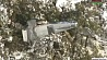 В результате крушения одномоторного самолета в Аризоне погибли 4 человека У выніку крушэння аднаматорнага самалёта ў Арызоне загінулі 4 чалавекі