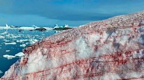 В Антарктиде покраснел снег
