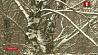 Осадки на сегодня прогнозируют белорусские синоптики Ападкі на сёння прагназуюць беларускія сіноптыкі