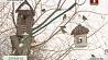 В Барановичах в одной из усадеб внимание привлекает необычный птичий двор У Баранавічах у адной з сядзіб увагу прыцягвае незвычайны птушыны двор