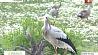 В Гродненском зоопарке окольцевали птенцов У Гродзенскім заапарку акальцавалі птушанят