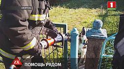 Спасатели пришли на подмогу собаке в Сморгони