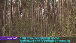 Штраф до 675 рублей за нарушение запрета на посещение лесов У Беларусі забарона на наведванне лясоў дзейнічае ў  трох раёнах краіны