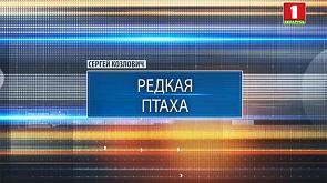 Белорусские ученые успешно восстанавливают популяцию вертлявой камышевки