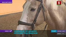 Под Минском проходит чемпионат по конкуру