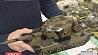 Рекордной коллекцией танков прославились школьники из Могилева Рэкорднай калекцыяй танкаў уславіліся школьнікі з Магілёва Mogilev school exhibits record collection of tanks