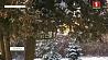 Снежная зима для диких зверей и птиц своего рода испытание Снежная зіма для дзікіх звяроў і птушак свайго роду выпрабаванне