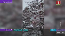 В Токио как раз в период цветения сакуры  выпал снег