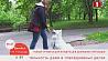 В Беларуси разработали проект новых правил обращения с домашними питомцами