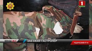 Жулик из Городокского района задержан ночью в гастрономе в деревне Сорочино