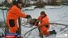 Сотрудники МЧС спасли лебедя из ледяного плена  Супрацоўнікі МНС выратавалі лебедзя з ледзянога палону