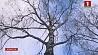 Синоптики на сегодня объявили штормовое предупреждение Сіноптыкі на сёння абвясцілі штармавое папярэджанне