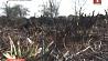Уборка в Копыльском районе обернулась пожаром Прыбіранне ў Капыльскім раёне абярнулася пажарам