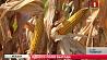 Кукурузное поле, засеянное Александром Лукашенко и Игорем Додоном, дало хороший урожай  Кукурузнае поле, засеянае Аляксандрам Лукашэнкам і Ігарам Дадонам, дало добры ўраджай
