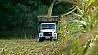 В южных районах Минской области начали уборку кукурузы У паўднёвых раёнах Мінскай вобласці пачалі ўборку кукурузы