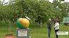 Памятники овощам и фруктам Помнікі гародніне і садавіне