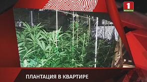 Зона Х. Вечерний выпуск (01.04.2020)