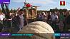 Бельгийцу удалось вырастить тыкву весом  более тонны