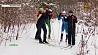 Семья Соловьевых из агрогородка Пушки увлечена лыжами  Сям'я Салаўёвых з аграгарадка Пушкі захапляецца лыжамі