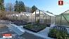 Ботанический сад подготовил коллекцию теплолюбивых растений к морозной зиме Батанічны сад падрыхтаваў калекцыю цеплалюбівых раслін да марознай зімы