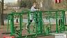 В парке экстремальных видов спорта планируют открыть сезон занятий  У парку экстрэмальных відаў спорту плануюць адкрыць сезон заняткаў