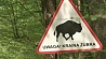 Польша продолжит вырубку деревьев в Беловежской пуще Польшча працягне высечку дрэў у Белавежскай пушчы