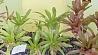 В коллекции Ботанического сада более 800 видов суккулентных растений  У калекцыі Батанічнага сада больш за 800 відаў сукулентных раслін