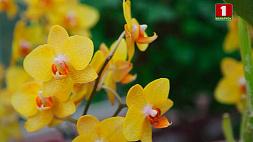Коллекция орхидей Центрального ботанического сада