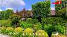 Живые изгороди на даче. Какие растения выбрать